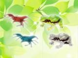 虫かご図鑑ザリガニ&カエル